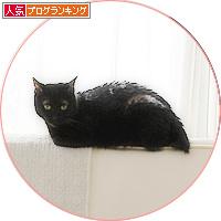 平和という名の猫_a0389088_18193312.jpg