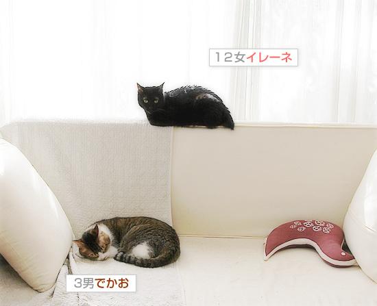 平和という名の猫_a0389088_18193319.jpg