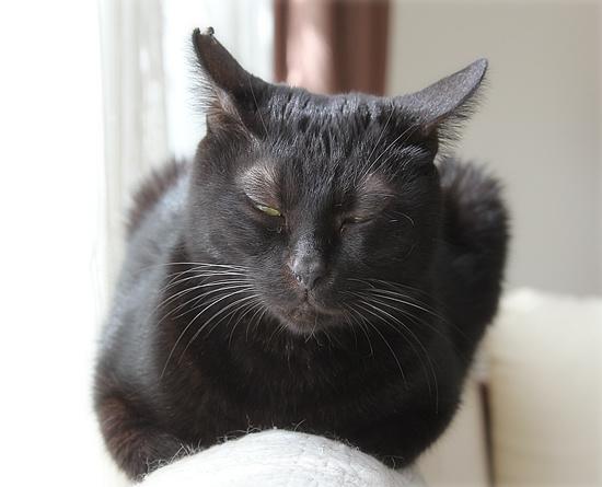 平和という名の猫_a0389088_18193380.jpg