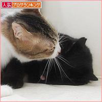 もしゃという猫_a0389088_18210349.jpg