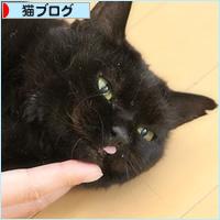 もしゃという猫_a0389088_18210360.jpg