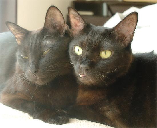世界猫の日_a0389088_18234347.jpg