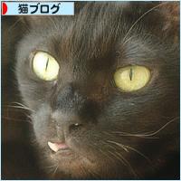 世界猫の日_a0389088_18234411.jpg
