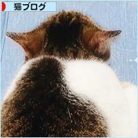 お江戸便り_a0389088_18240280.jpg