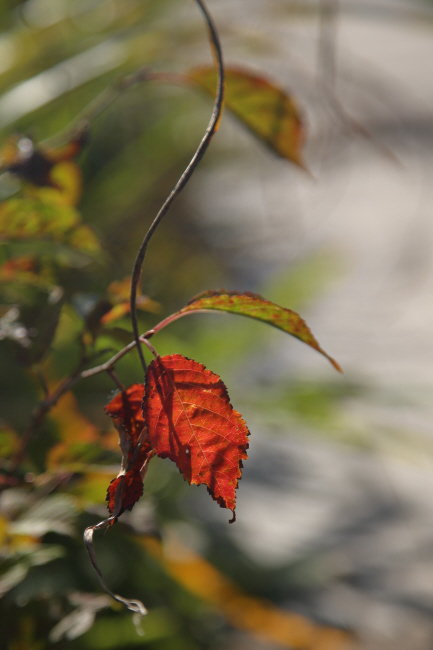 八島湿原④ 秋の色 _a0357206_18420439.jpg