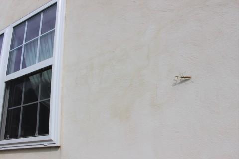 板壁のヘンリーヅタの実が(*^^*)_e0341606_18590021.jpg