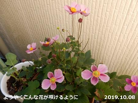 e0033229_1984612.jpg