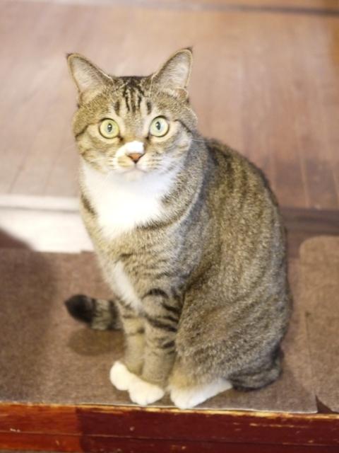 猫のお留守番 らんまるくん編。_a0143140_21504378.jpg