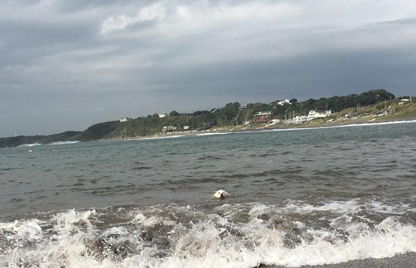 台風が近づく前に!_c0110361_14343240.jpg