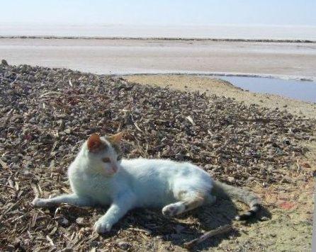 2月22日(金)チュニジア旅行5日目・・・いよいよサハラ砂漠へ_f0060461_13360154.jpg