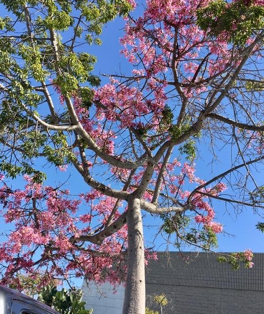南カリフォルニアの10月の風景_e0350971_13043212.jpg