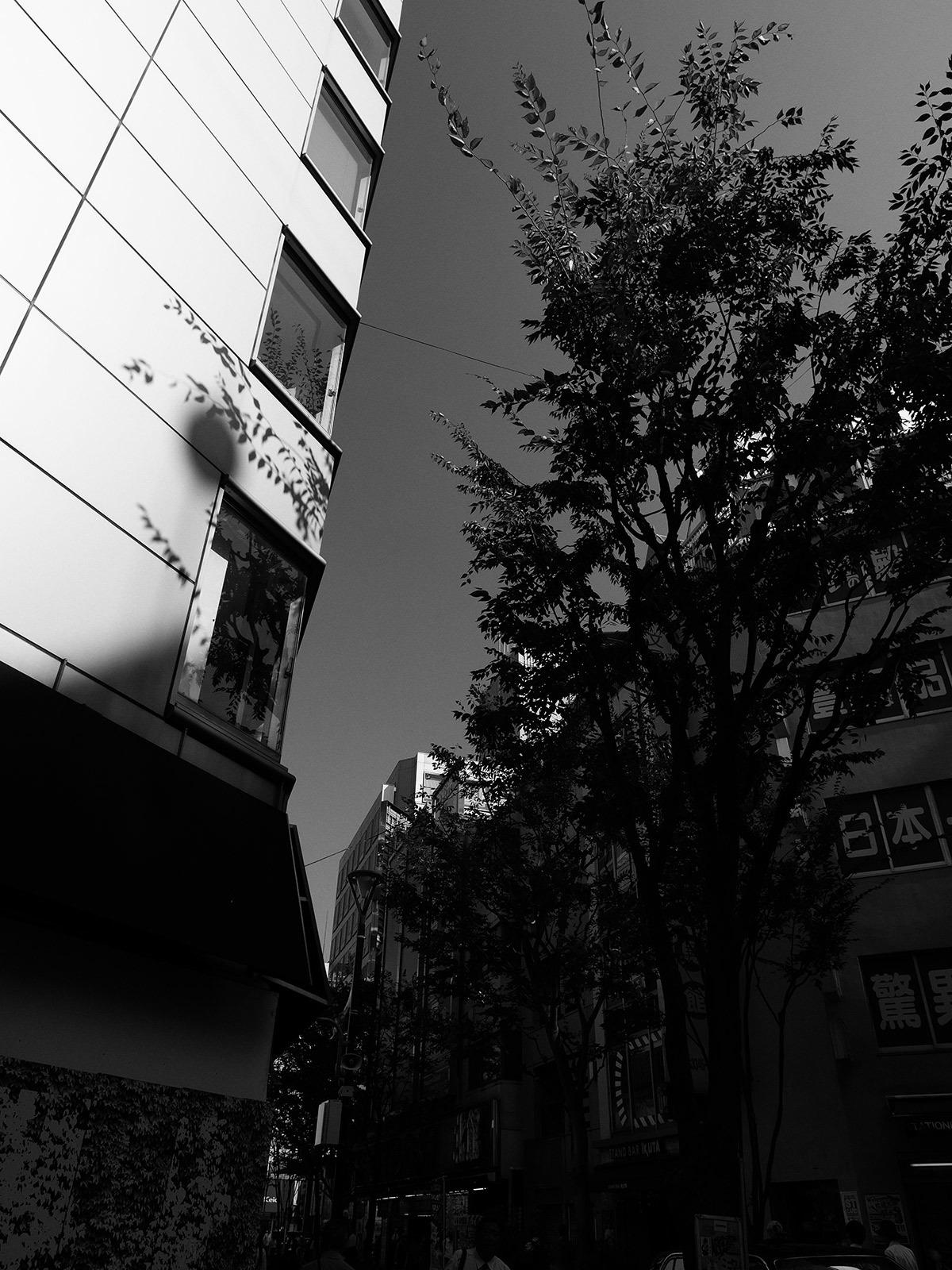 街路樹と影_f0121181_05565548.jpg