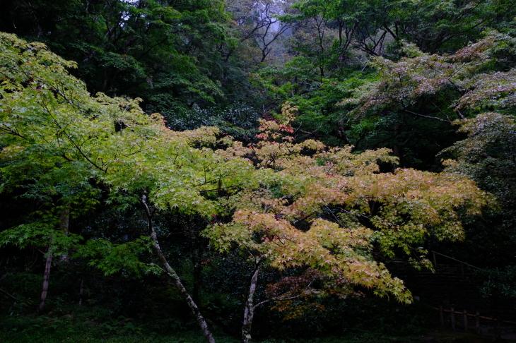 奈良の旅 \'19_e0000910_18300019.jpg