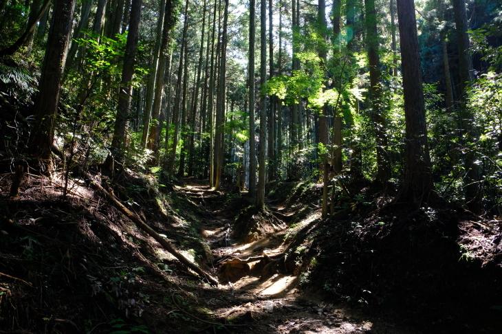 奈良の旅 \'19_e0000910_19583888.jpg