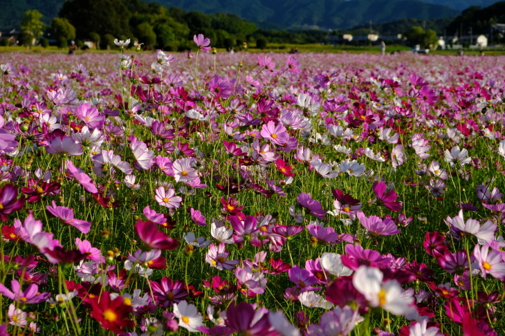 奈良の旅 \'19_e0000910_20070573.jpg