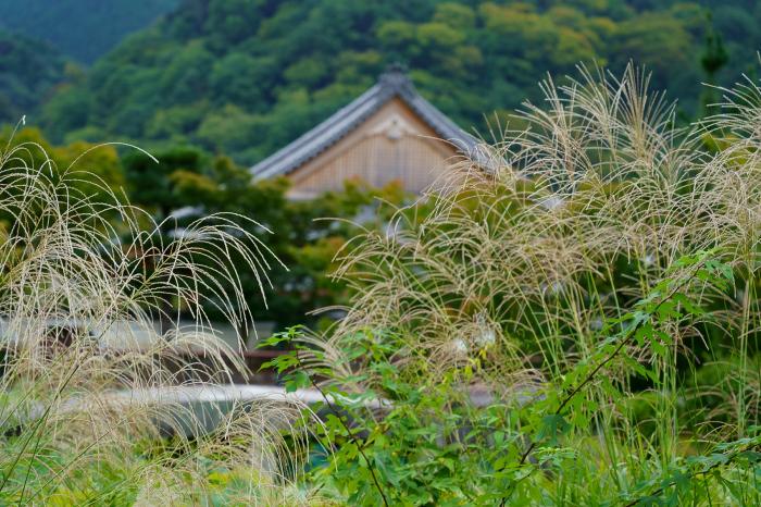 嵐山の朝_e0177413_17032897.jpg