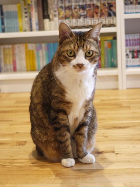 猫のお留守番 じょあんちゃん編。_a0143140_21364989.jpg