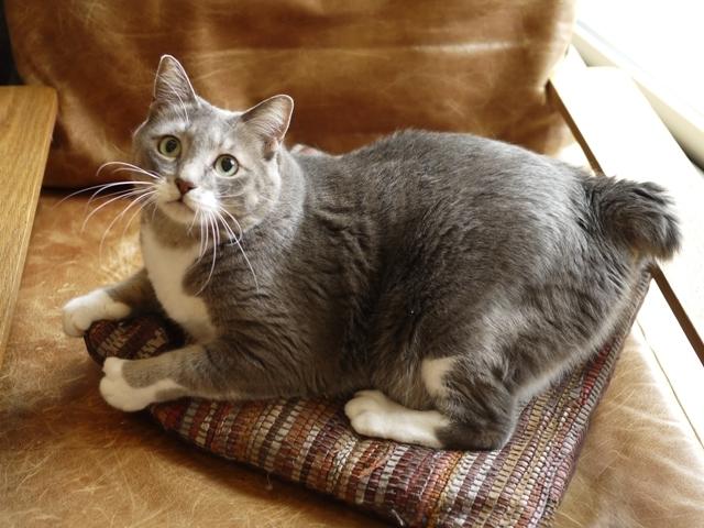 猫のお留守番 あーるくん編。_a0143140_21415383.jpg