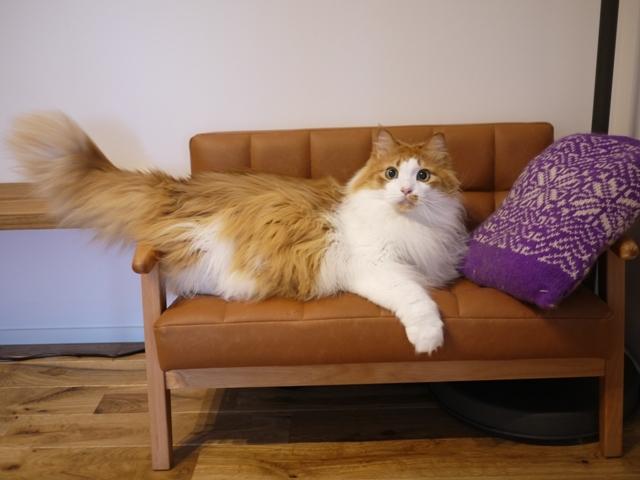 猫のお留守番 もんてぃくん編。_a0143140_21435545.jpg