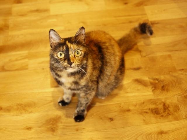 猫のお留守番 さんかちゃん編。_a0143140_21472645.jpg