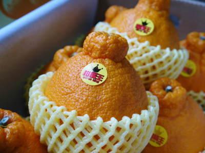 デコポン(肥後ポン) 令和元年度も12月下旬の収穫に向け果皮の色が抜け始めてきました!!_a0254656_16335540.jpg