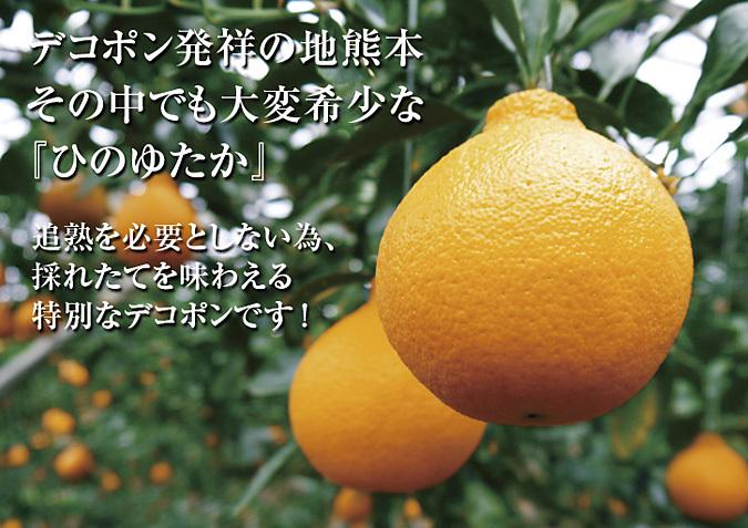 デコポン(肥後ポン) 令和元年度も12月下旬の収穫に向け果皮の色が抜け始めてきました!!_a0254656_17062477.jpg