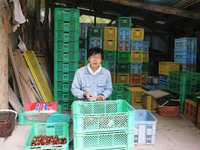 デコポン(肥後ポン) 令和元年度も12月下旬の収穫に向け果皮の色が抜け始めてきました!!_a0254656_17080791.jpg