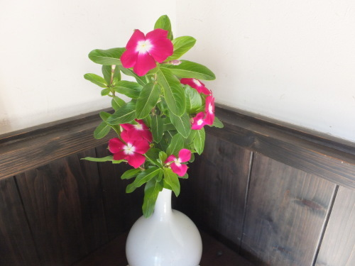 花を楽しむ器たち~6_d0336460_04114231.jpg