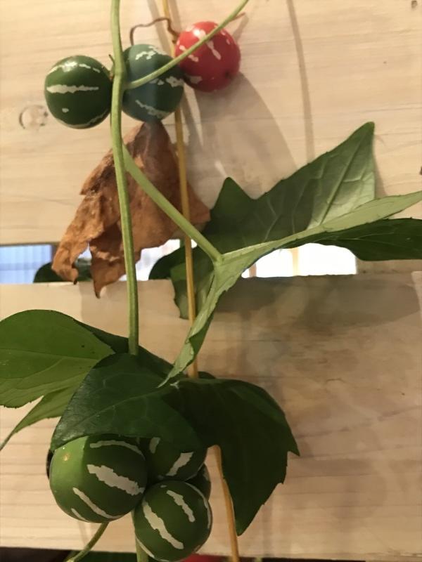 珍しいまん丸の瓜・・・「雀瓜がとどきました。」編_e0359584_20394153.jpg