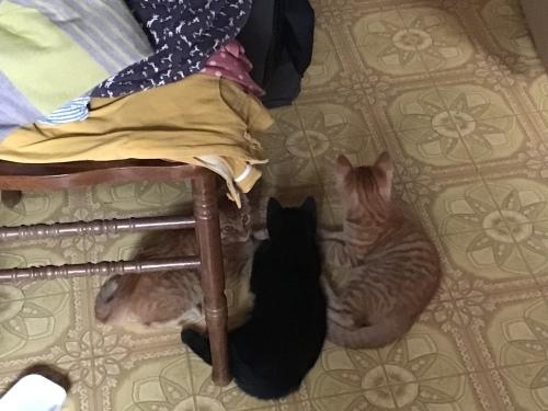 アビーという野良猫 〜 電話の向こう側_c0027188_21282962.jpeg
