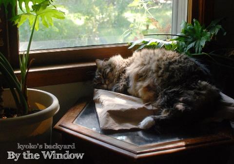 猫が日向を求めるシーズン到来_b0253205_18313066.jpg
