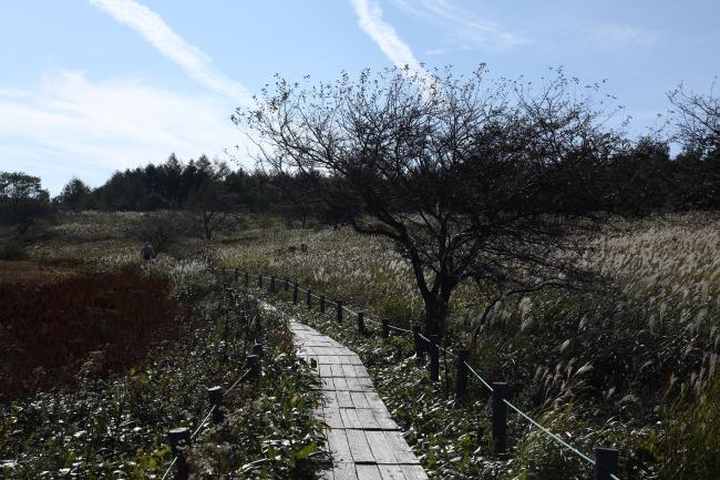 八島湿原⑤ 木道を歩く _a0357206_22031905.jpg