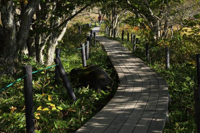八島湿原⑤ 木道を歩く _a0357206_22035134.jpg