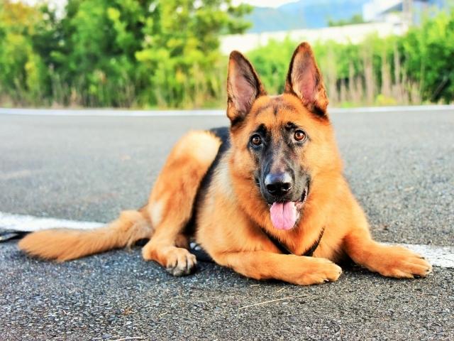 大型犬の同行避難を考える_d0360206_00591785.jpg