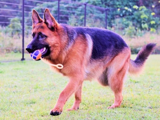 大型犬の同行避難を考える_d0360206_00592557.jpg