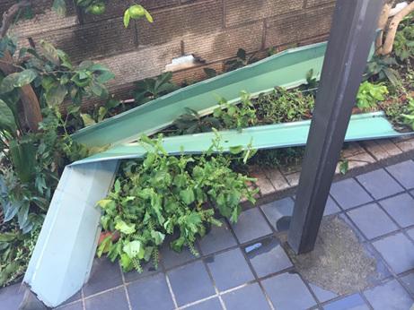 屋根が飛んでくるほど、すごい台風でした_d0020309_07543738.jpg