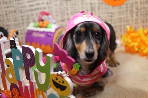 10月8日ご来店のワンちゃんです!!_b0130018_09182163.jpg