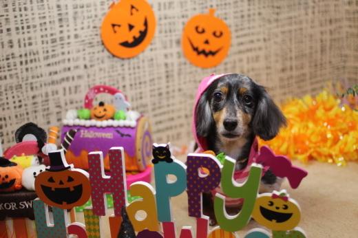 10月8日ご来店のワンちゃんです!!_b0130018_09183519.jpg