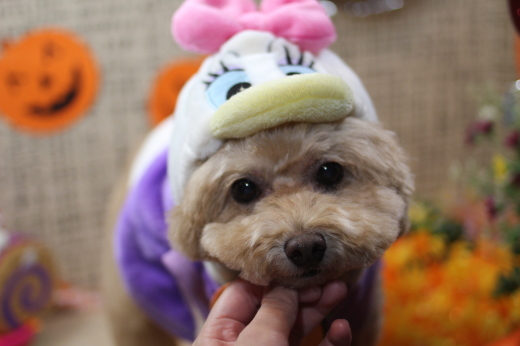 10月8日ご来店のワンちゃんです!!_b0130018_09205996.jpg