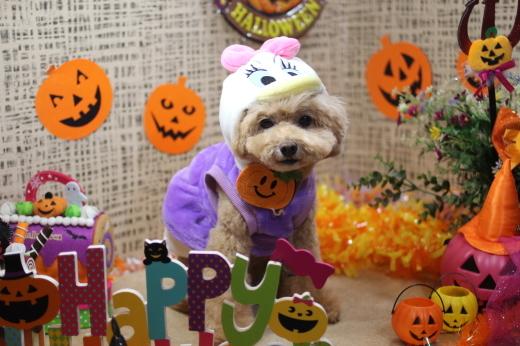 10月8日ご来店のワンちゃんです!!_b0130018_09210704.jpg