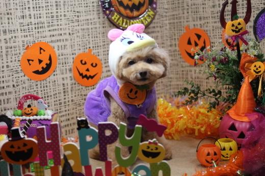 10月8日ご来店のワンちゃんです!!_b0130018_09211794.jpg