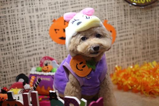 10月8日ご来店のワンちゃんです!!_b0130018_09212631.jpg