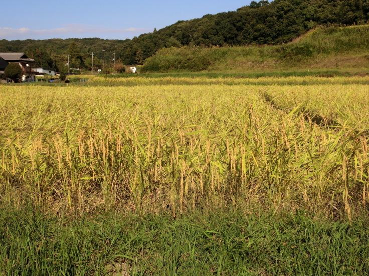第30回 日本緑内障学会 その10(1173) シンポジウム7_f0088231_14152421.jpg