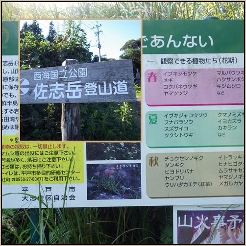 秋の花旅・・・②佐志岳へ_e0164643_15183494.jpg