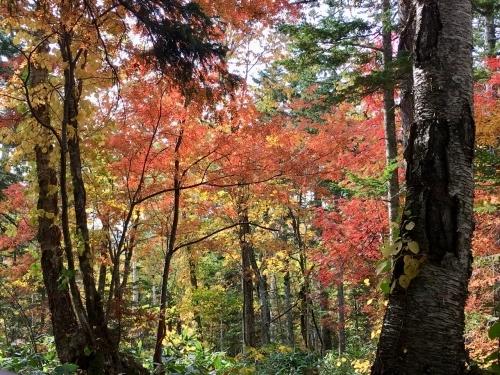 天人峡滝見台の紅葉と美瑛秋庭_e0326953_15021406.jpg
