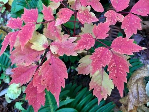 天人峡滝見台の紅葉と美瑛秋庭_e0326953_15044652.jpg