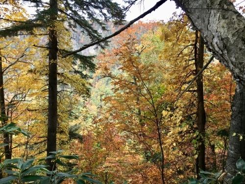 天人峡滝見台の紅葉と美瑛秋庭_e0326953_15063715.jpg