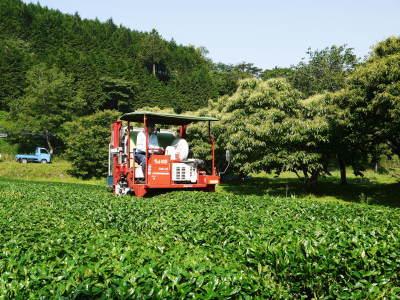 水源キウイ 今年も完全無農薬で順調に育っています!令和元年の収穫及び出荷は11月中旬(予定)です!!_a0254656_16452597.jpg