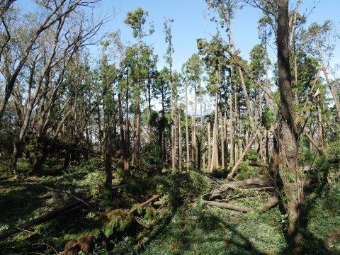 【台風19号の六国見山被害詳報】⓵森林公園内はまるで爆撃跡_c0014967_16270776.jpg