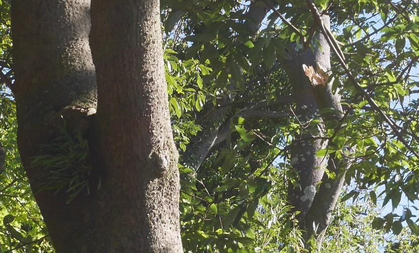 【台風19号の六国見山被害詳報】⓵森林公園内はまるで爆撃跡_c0014967_16295284.jpg
